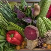 沖縄の味を知り尽くすシェフが選ぶ島野菜