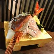 ホウボウは、カサゴ目ホウボウ科に属する魚類 変わった外見と動作が特徴の海水魚で、美味な食用魚でもあります 是非当店にお越しいただき食していただきたい逸品です