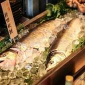 青森や函館など、北の海から届く新鮮な魚介類が味わえる