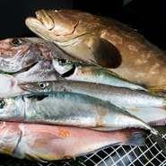 毎朝、港町に店主自らが出向くこだわりよう。フグをも超える高級魚クエや、網どりのものに比べて格段に味が良い一本釣りの鯛など、時期によって内容が変わるのも楽しみの一つです。