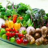 素晴らしい水系と土壌に恵まれた沼津&近郊の旬野菜を直送仕入れ