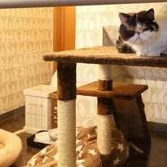 """ガラス張りの""""特別室""""にいるジバニャンは、愛想が良く、子どもの相手もしてくれるそう。ガラスの前にはロールスクリーンがあり、お客様の""""猫好き度""""に合わせて登場します。"""