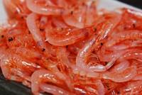 出世魚でも御馴染みの、すずき!小さい順で「せいご」・「ふっこ」・「すすき」と呼び名が変わります。 夏が旬の「すずき」、豊洲市場で活〆を仕入れます。歯応えも有り美味しい魚です。