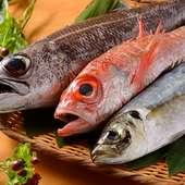 鮮魚 各種