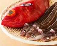 本日の天然魚